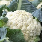 cauliflower2